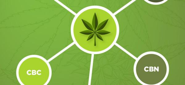 A Guide to Cannabinoids and Their Effects